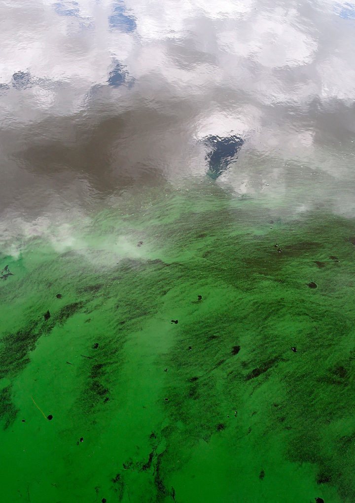 Is Blue-Green Algae Toxic for Children? What to Know – PEOPLE.com